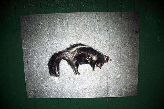 Intimidation à l'endroit de la bête puante locale, treize octobre MMXII, St-Henri, Montréal p.Q.